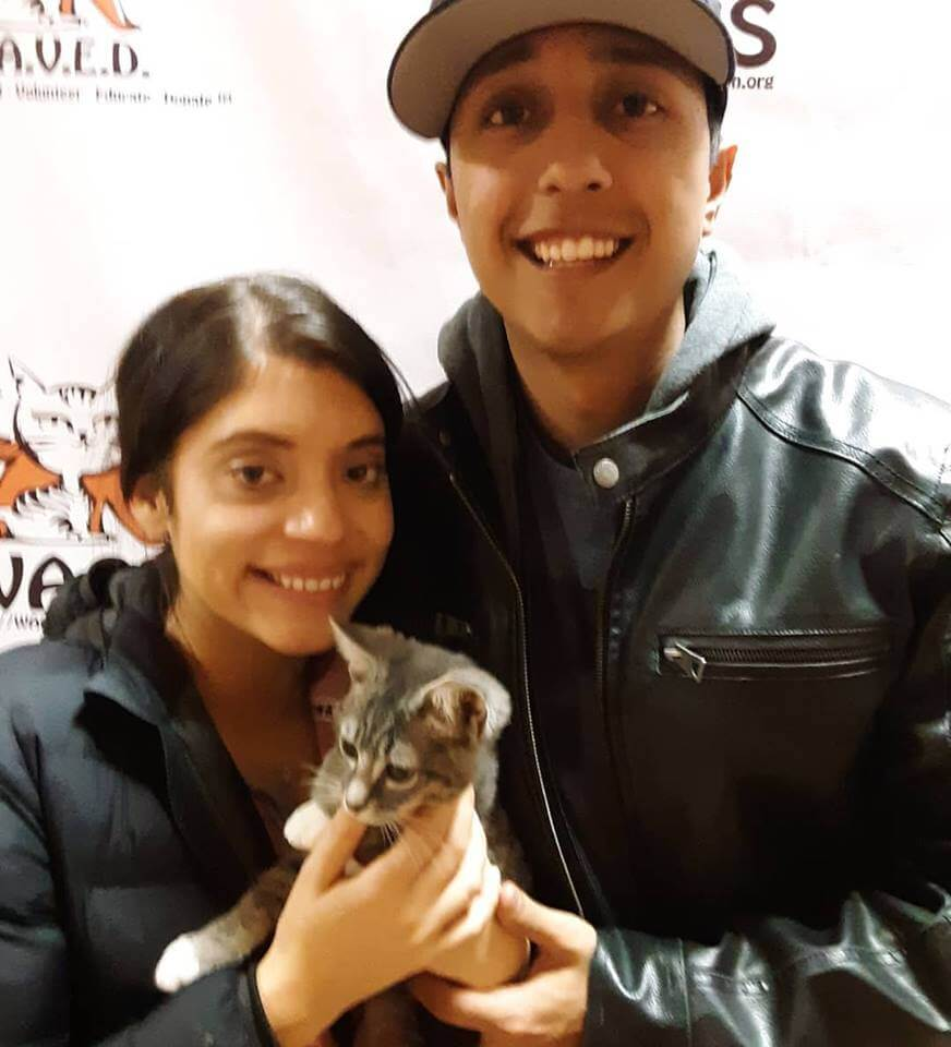 couple adopts a kitten WAGS