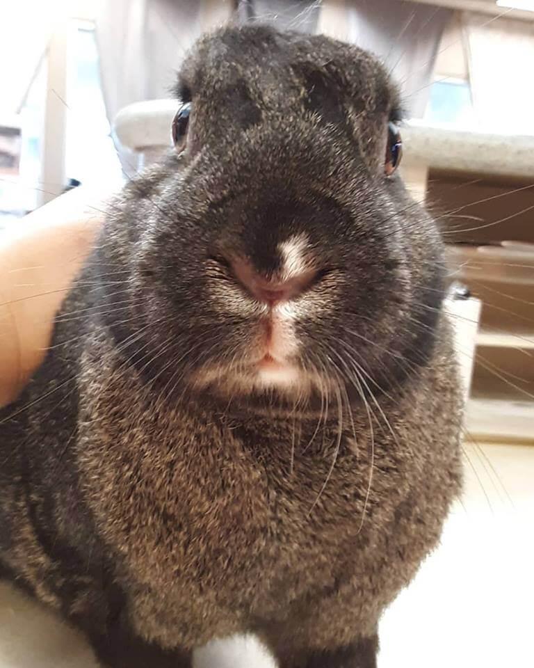 wags rabbit found