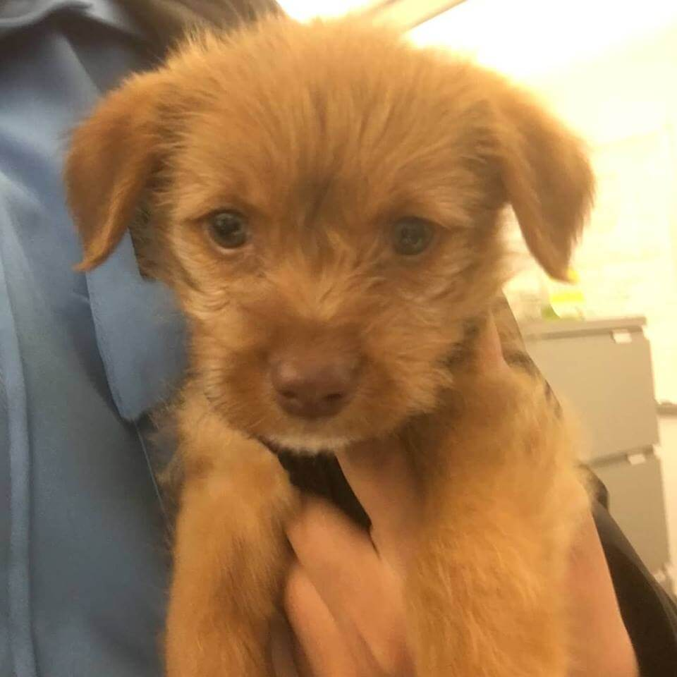 sweet little puppy found by WAGS