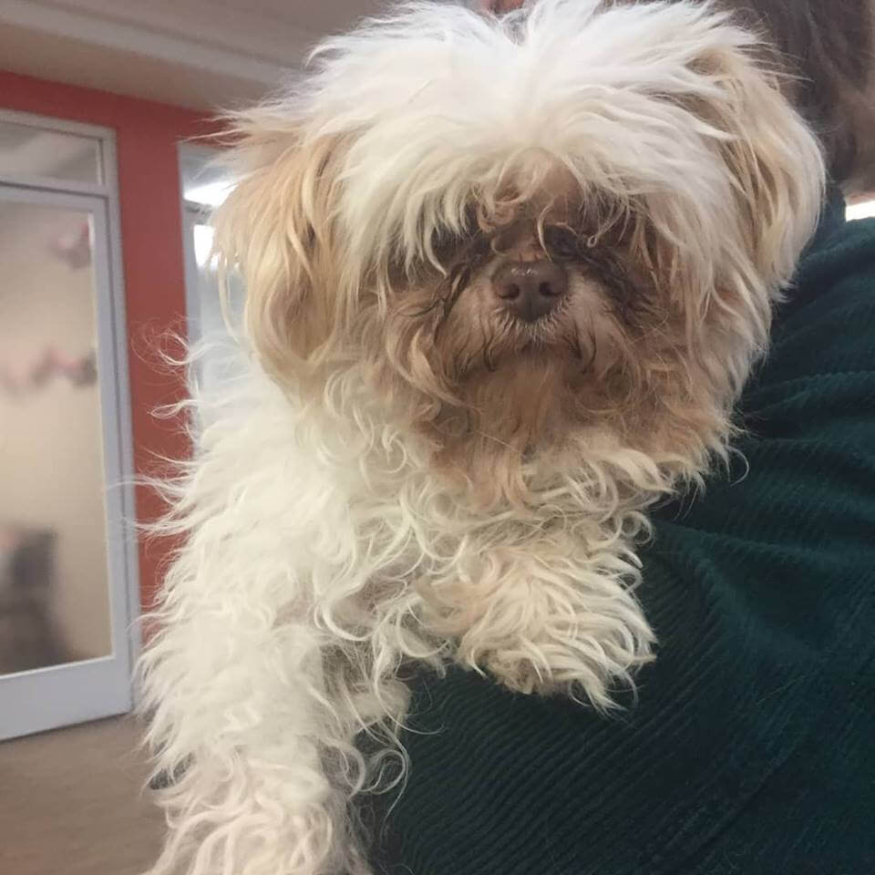 little furry dog found by WAGS