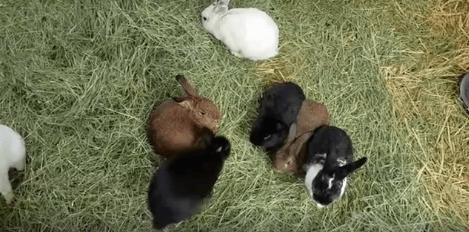 rabbit WAGS adoption