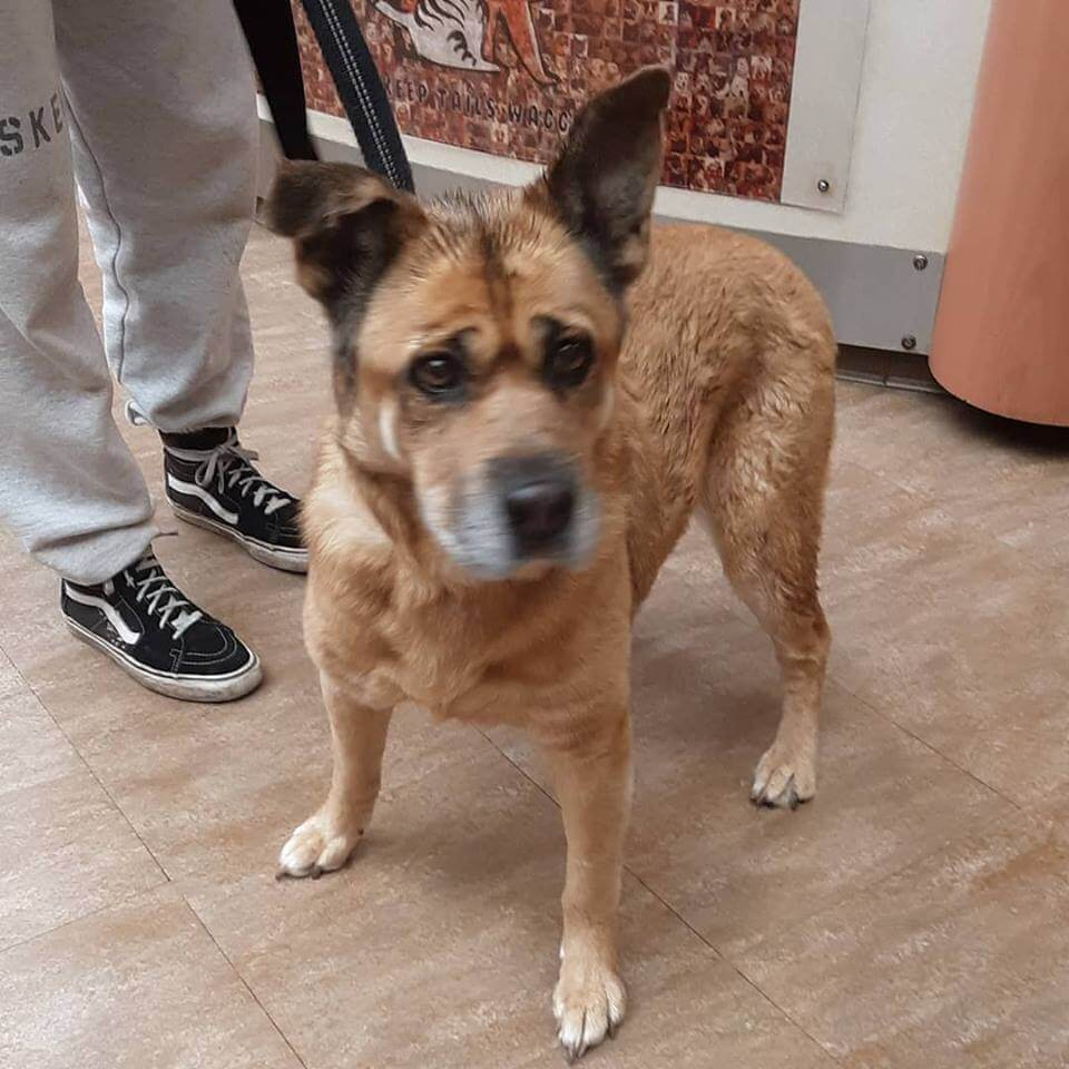 senior pet dog found by WAGS