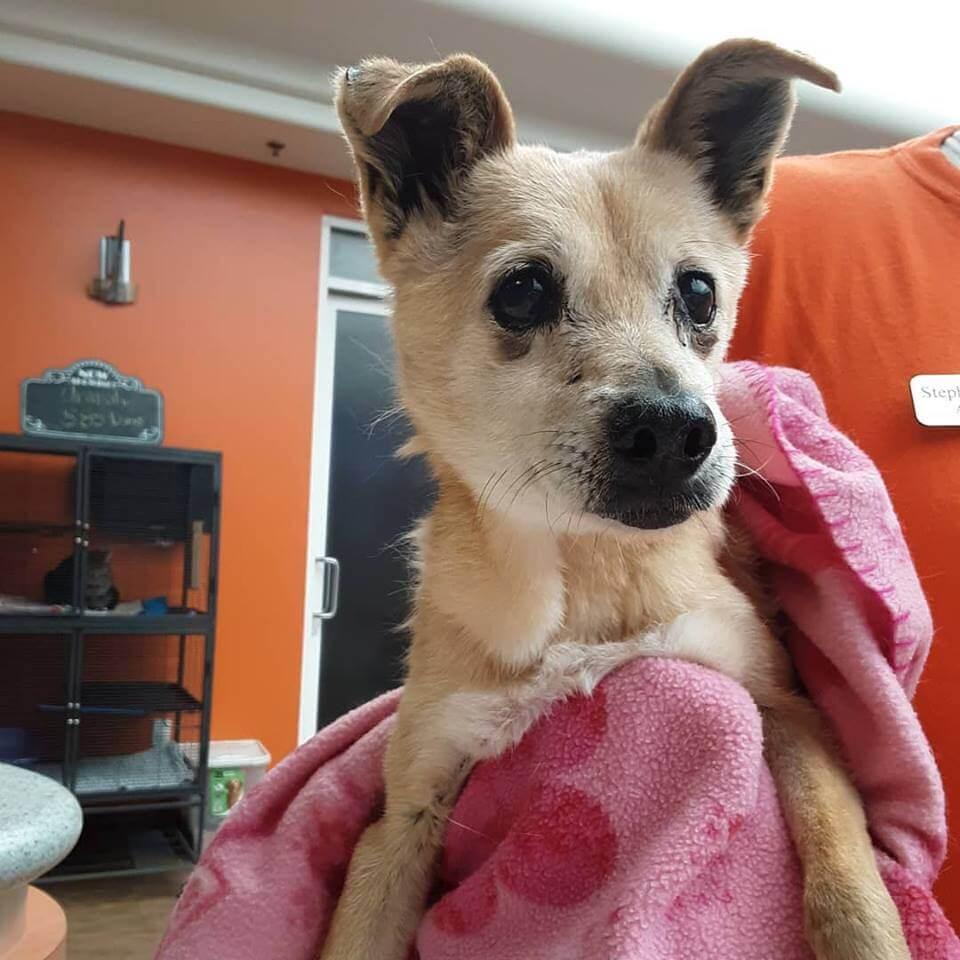 found dog by wags elderly female