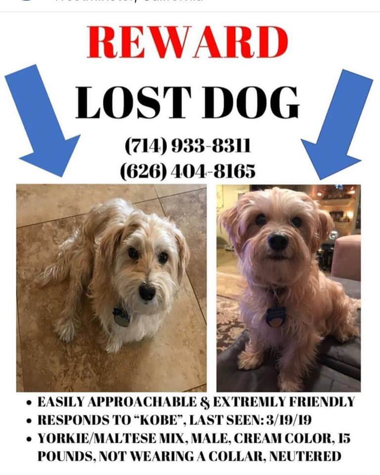 lost pet courtesy post dog kobe WAGS