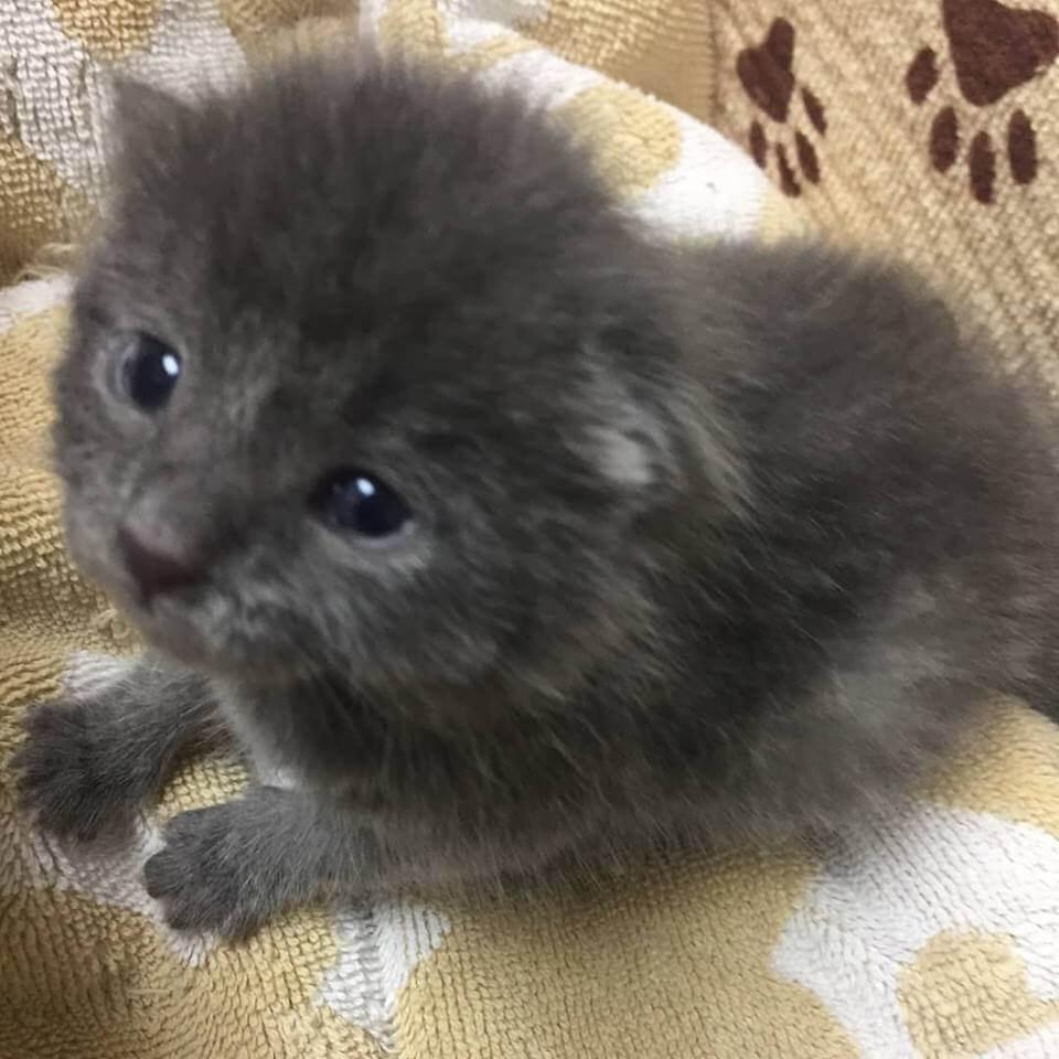 lovely kitten season adoption WAGS