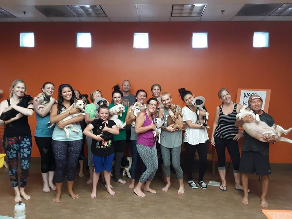 wags yoga class event