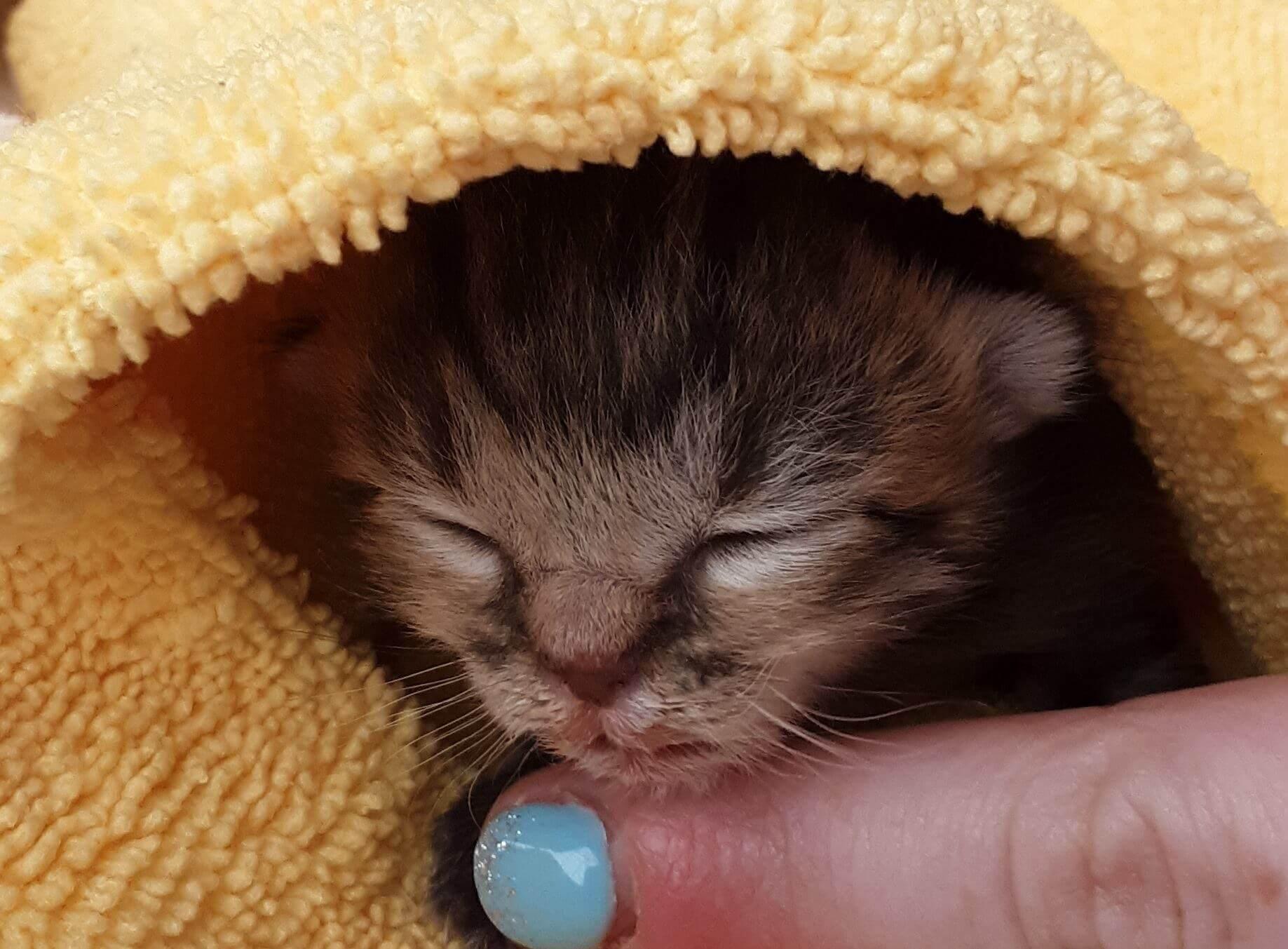 WAGS baby bottle foster kitten