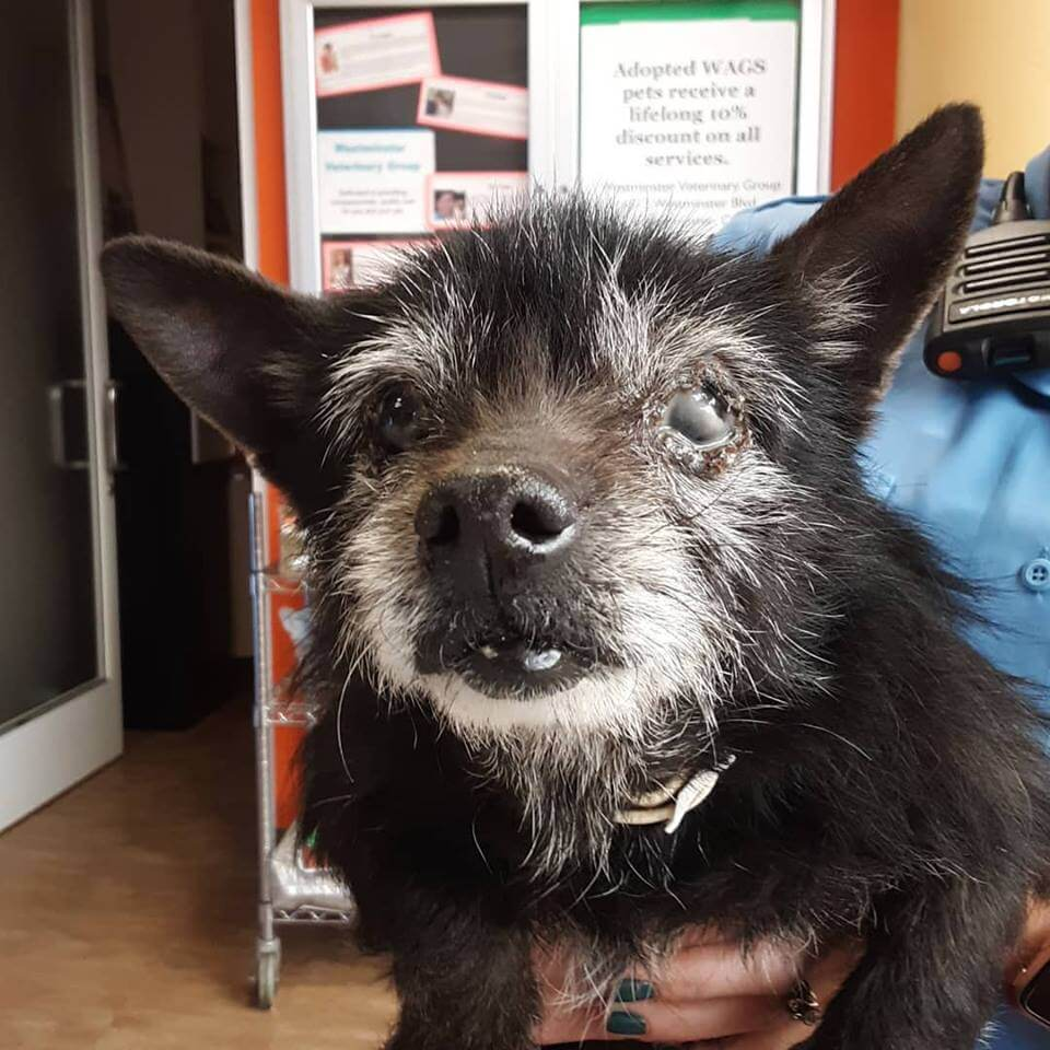 Senior Black Terrier mix found off of Natal Dr and Goldenwest WAGS