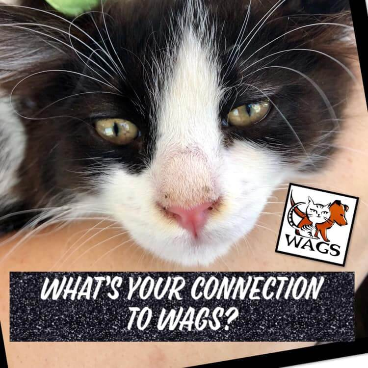 whats your connection to wags