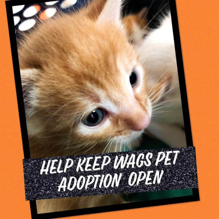 help keep wags pet adoption open