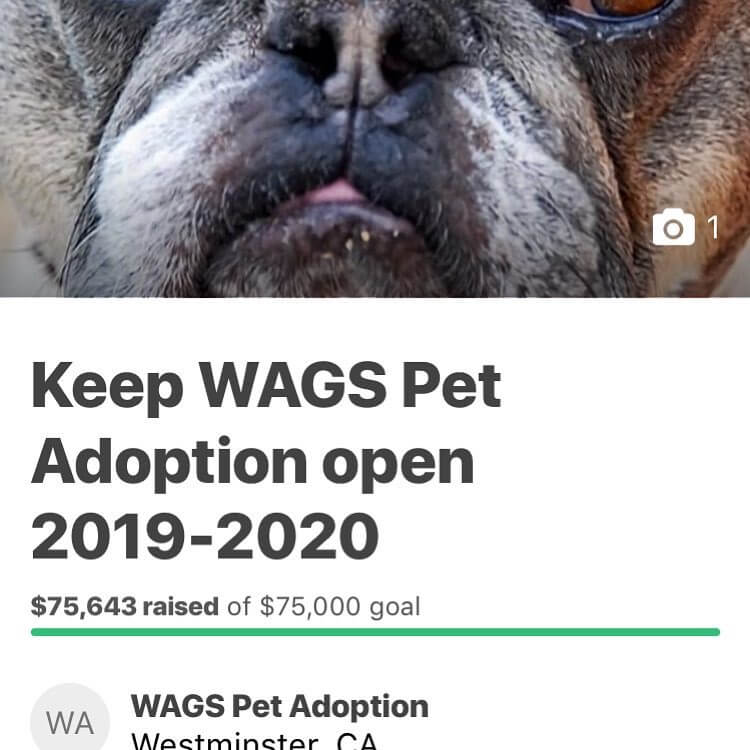 keep wags adoption open