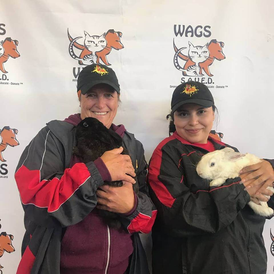 WAGS OFFICIALLY HAS ZERO RABBITS FOR ADOPTION