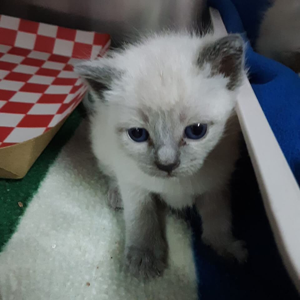Kittens that need to get into foster homes WAGS