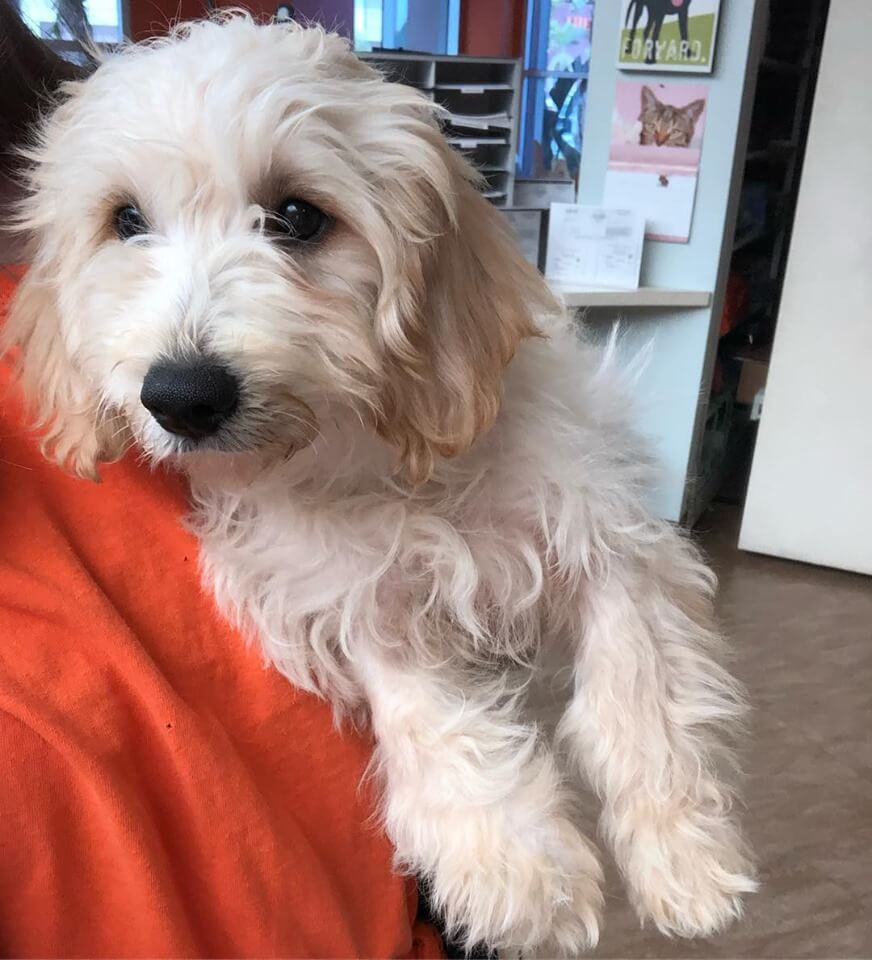 Male puppy found WAGS