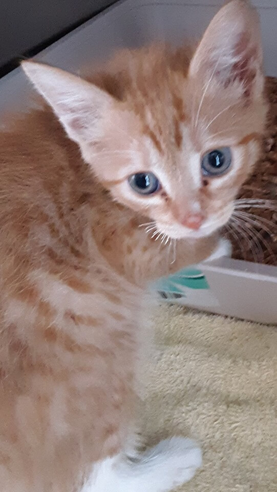 Kitten Party WAGS