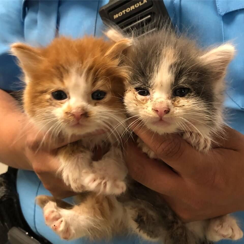 kitten Help WAGS