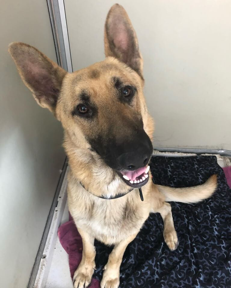 New Male dog A-1025 WAGS