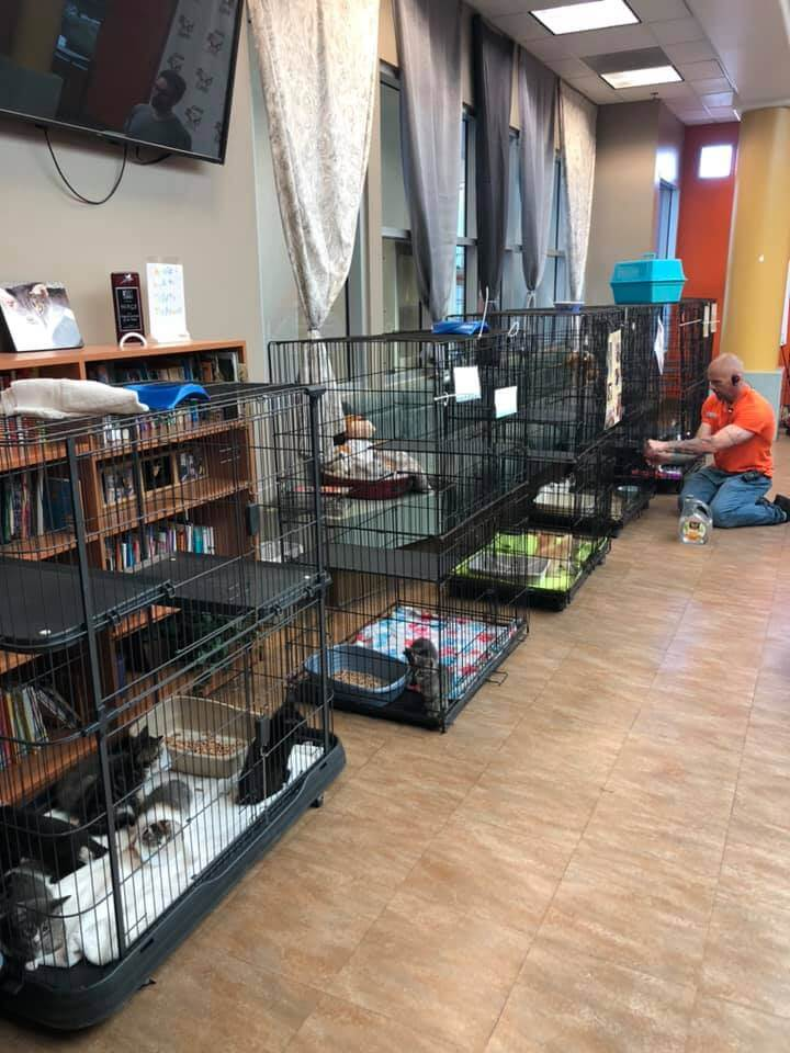 Kitten Party at WAGS