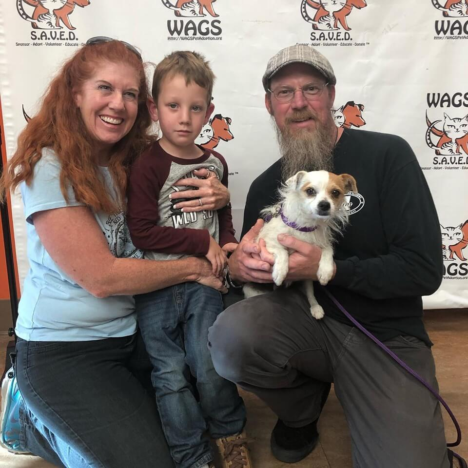 Chipmunk was adopted today wags