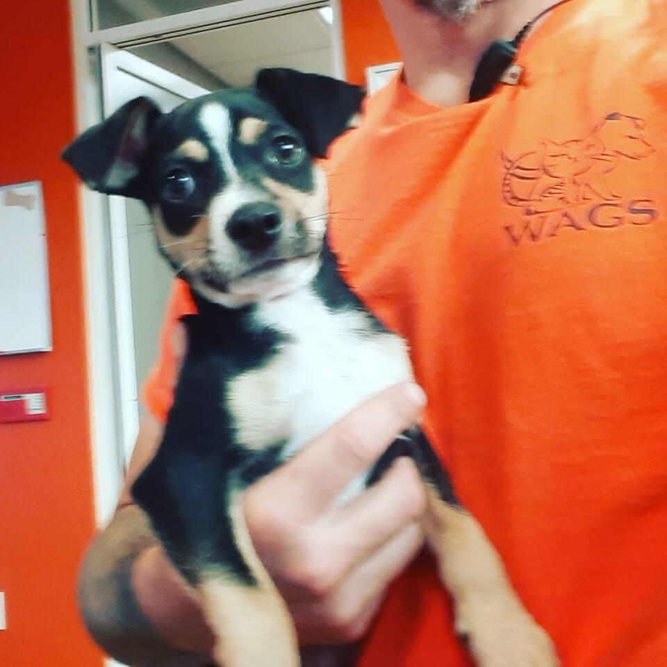 Male puppy found a Magnolia and Edinger WAGS
