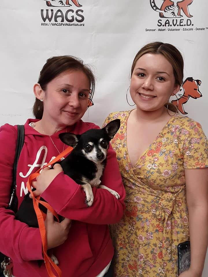 Cats / Dogs Adopted today WAGS