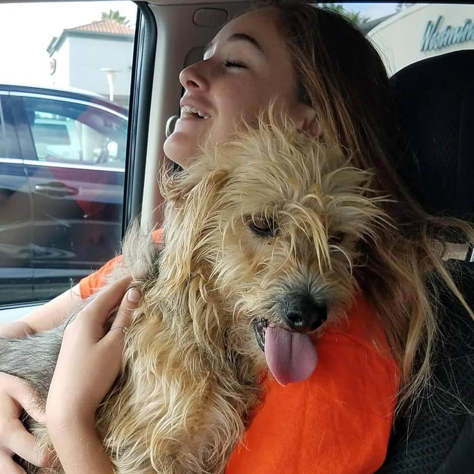 Garcia Terrier Adoption WAGS