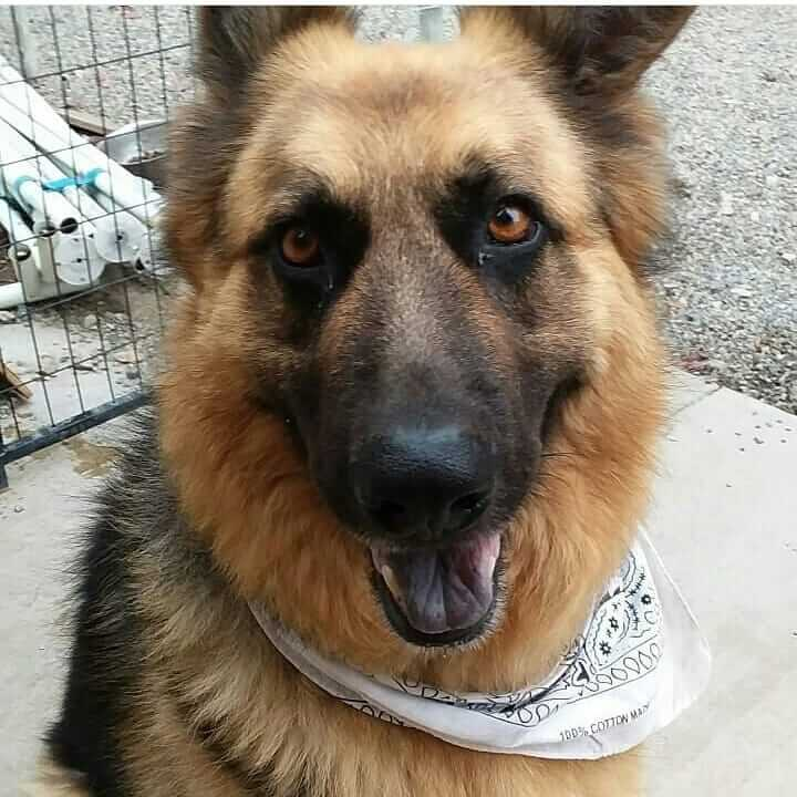 Felix friday come meet him and fall in love wags