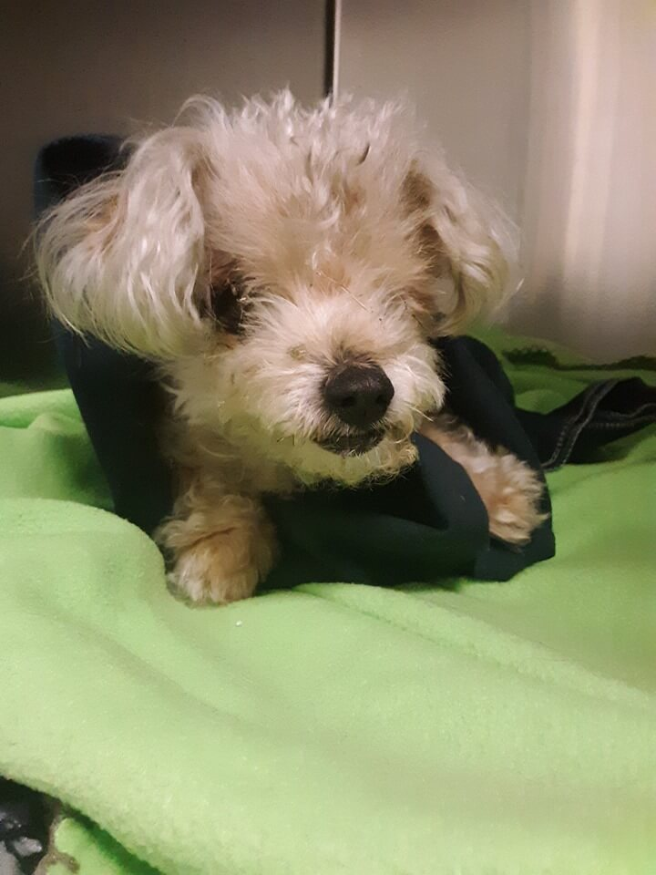 New impound male found off of Homer & Roxanne WAGS
