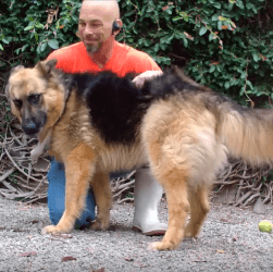 Felix Dog adoptation WAGS