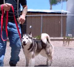 Johnny walker learning to walk wags