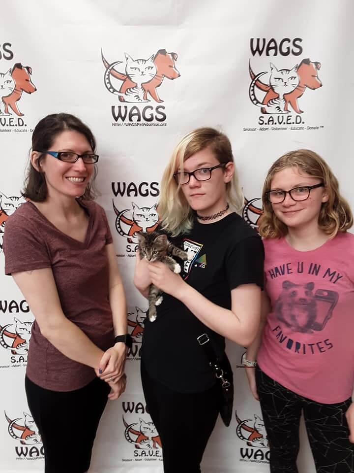 Dogs and cats Adopted WAGS