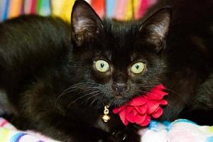 Kitten Party 12-5