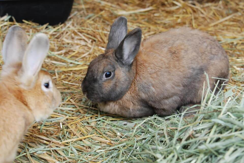 Rabbit Adoption WAGS