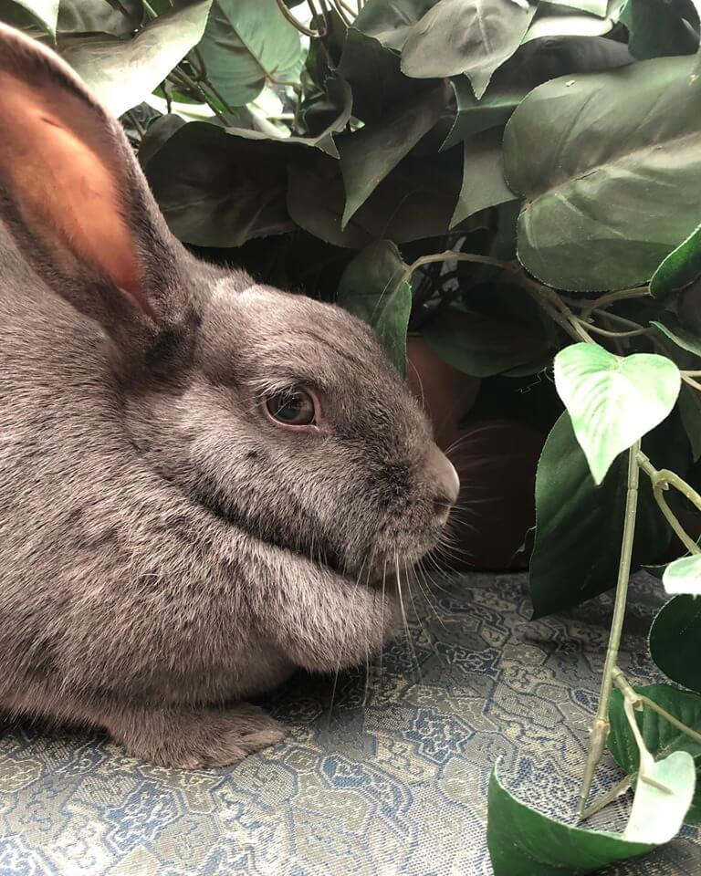Annie the Rabbit wags