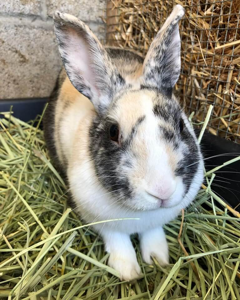 Moira rabbit adoption WAGS