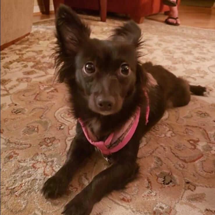 Female dog found # A-1369 WAGS