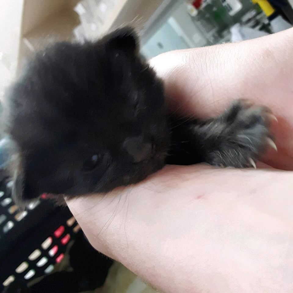 HELP! We have bottle babies that need to go into a foster home ASAP! WAGS