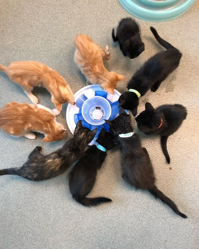 Treat time for the kittens WAGS