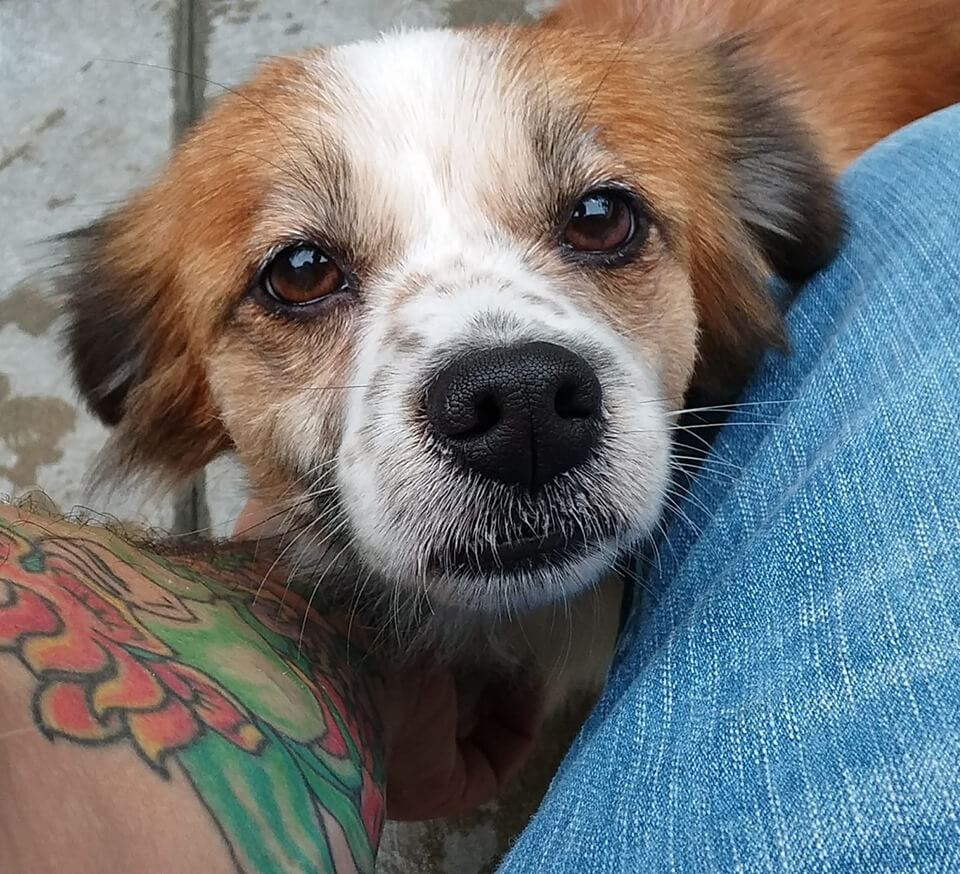 Sweet September is looking for a home WAGS