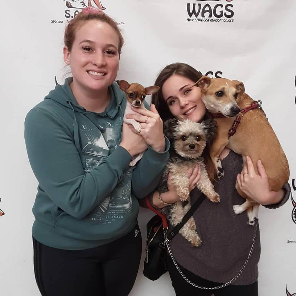 5 newly adopted dog and cats WAGS