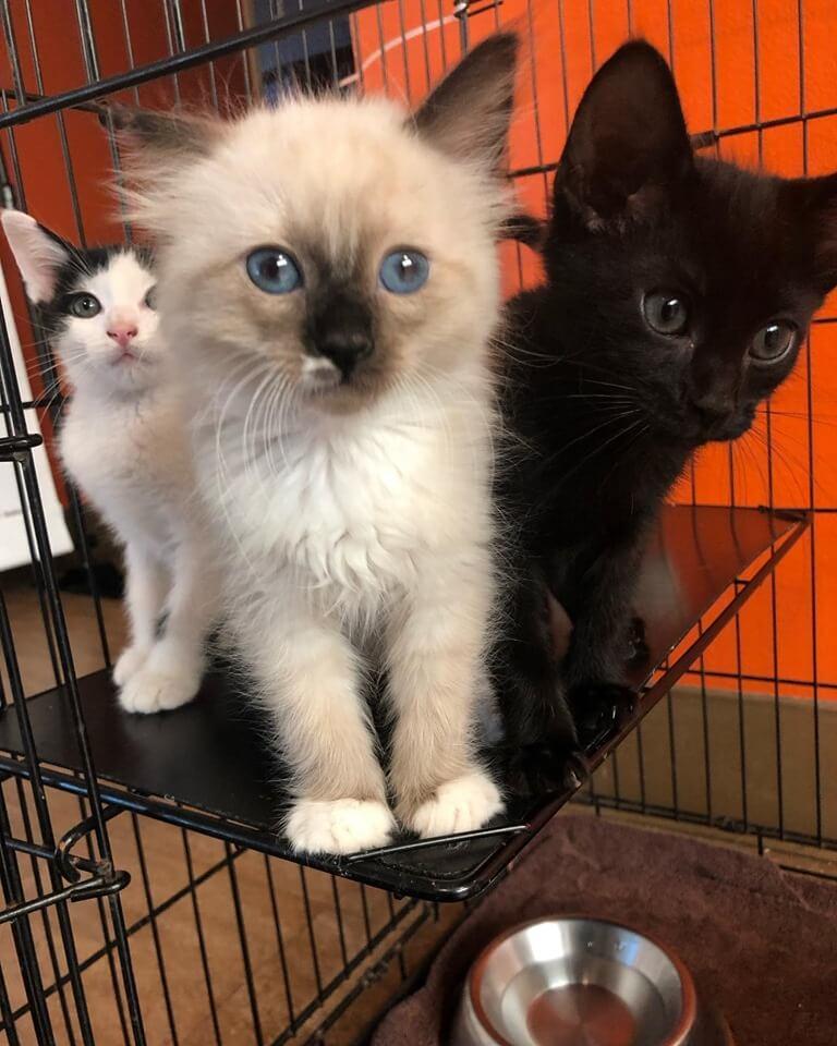 WAGS New feline cat adoption