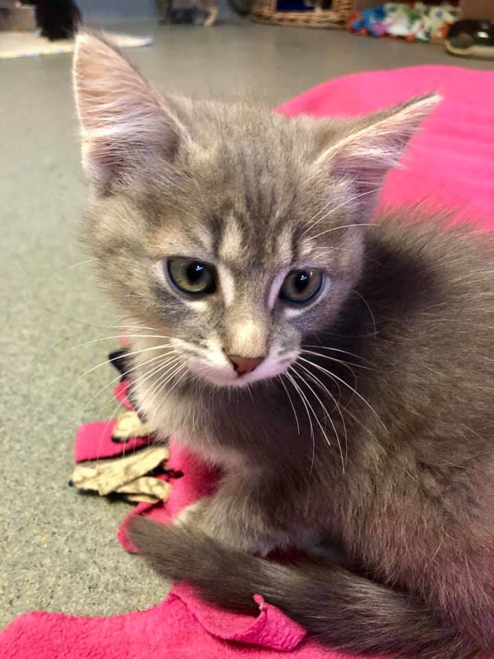WAGS has a new feline adoption special tomorrow until next Sunday!