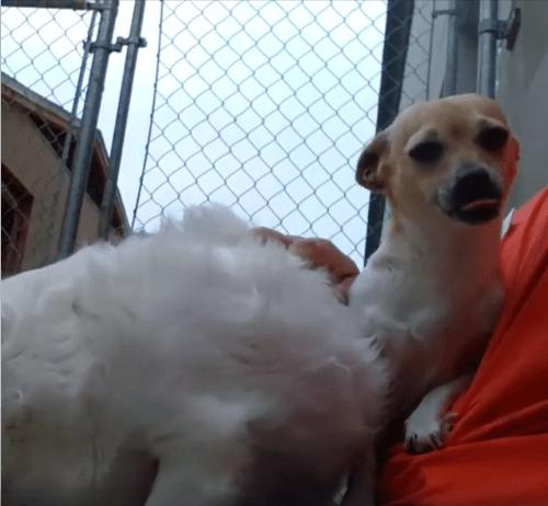 Peta and Chubby dog adoption WAGS