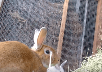 WAGS still has few Bunnies