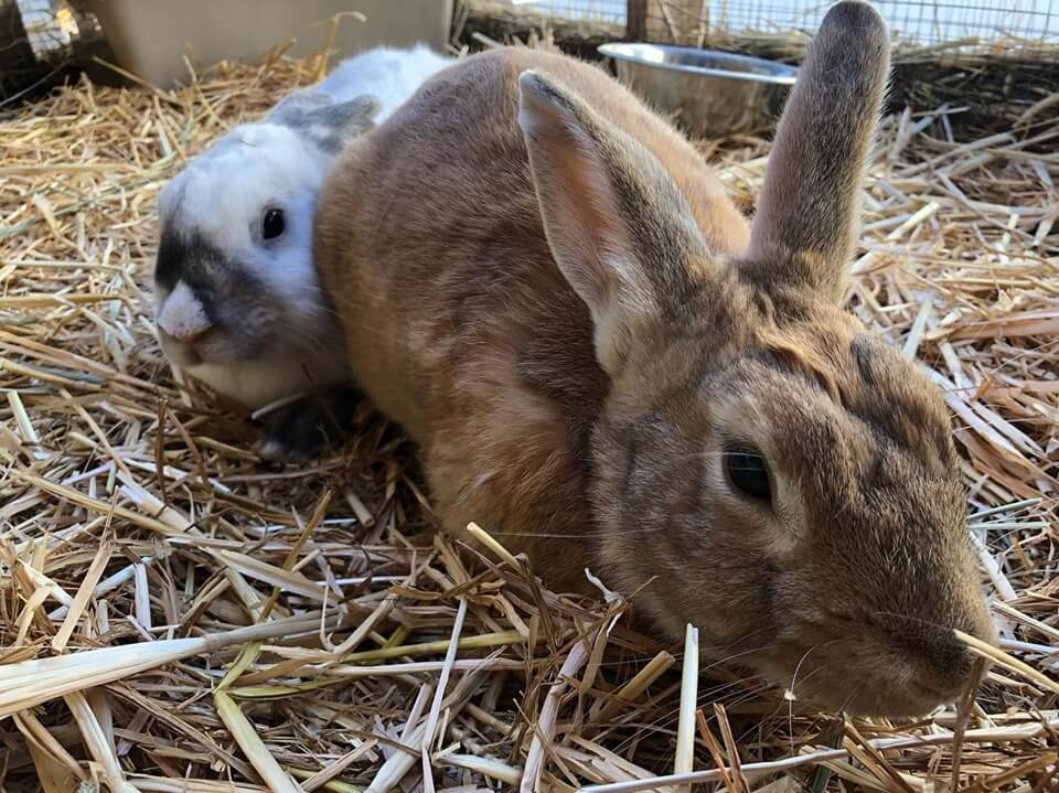 bunny adoption WAGS