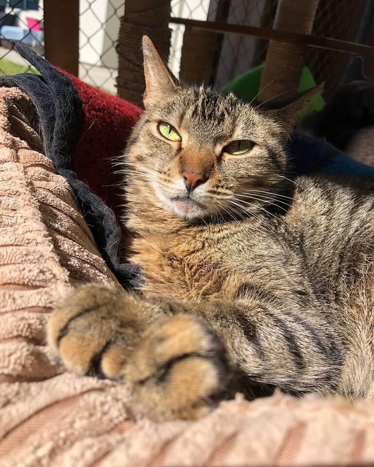 Sunbathing Maggie Adoption WAGS