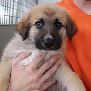 Dog adoption #A-1686 WAGS