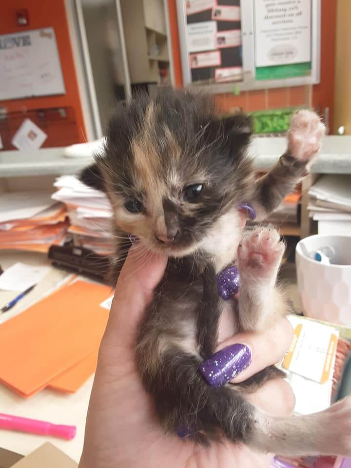 4 two week old bottle babies in NEED of a foster home WAGS