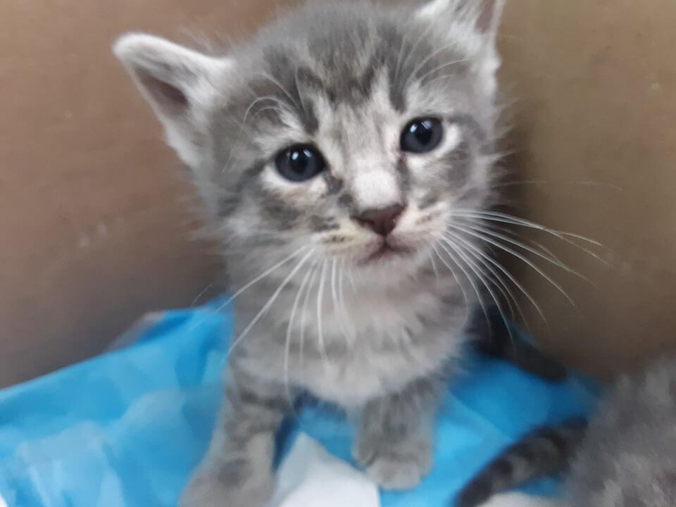 WAGS Kitten News