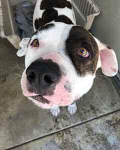 Rocky dog adoption WAGS